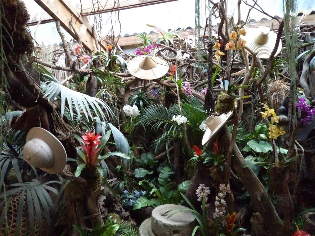 Flowers in bloom all year round at the tropical parc.   world ...